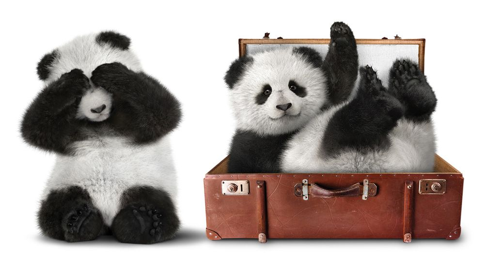 16_01154_SuitcasePandas.jpg