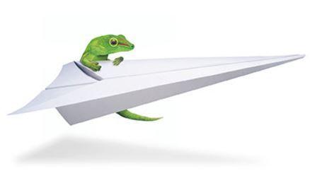 Lizard - Flight.JPG
