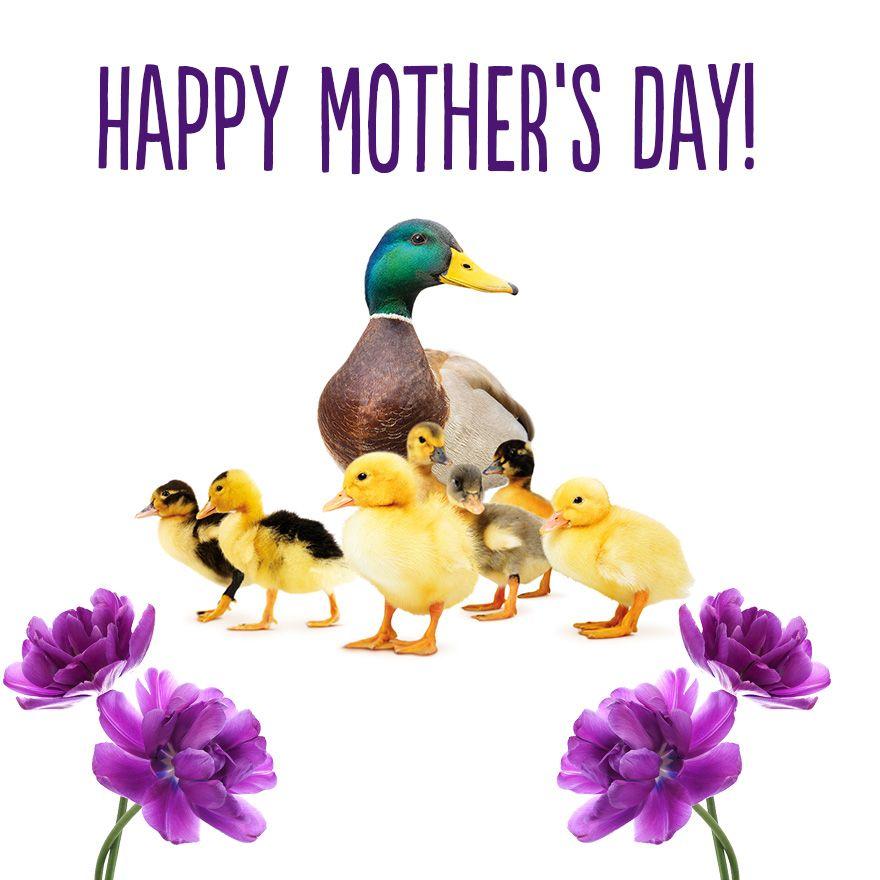 Mothers-day-neighbourhood.jpg