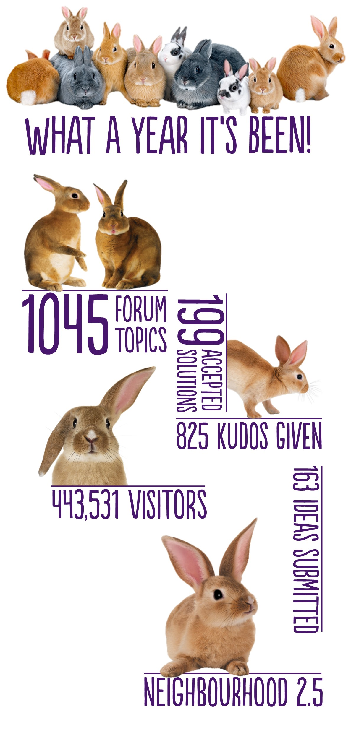 Year 3 Infographic Bunnies 2.jpg
