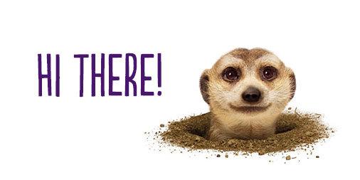 Hi There - Lemur.jpg