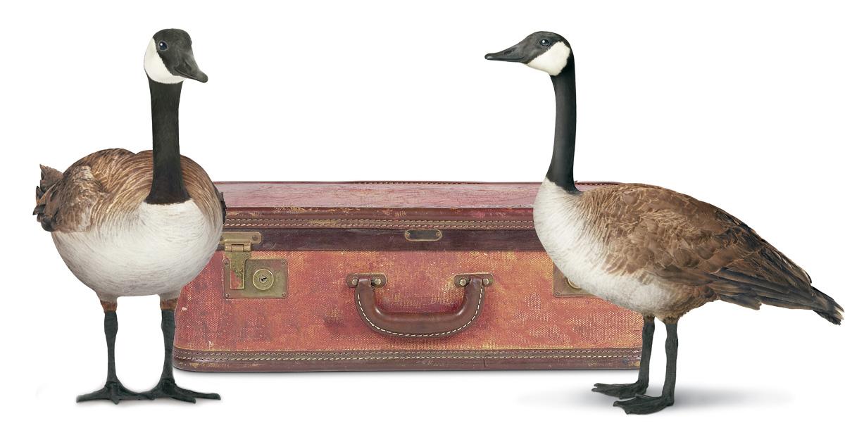 16_01154_SuitcaseGeese (1).jpg