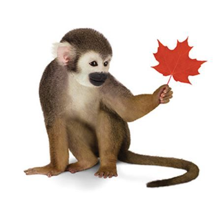 CanadaMonkey.JPG