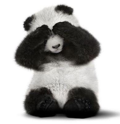 Shy Panda.JPG
