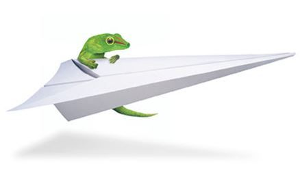 Lizard - Flight.JPG