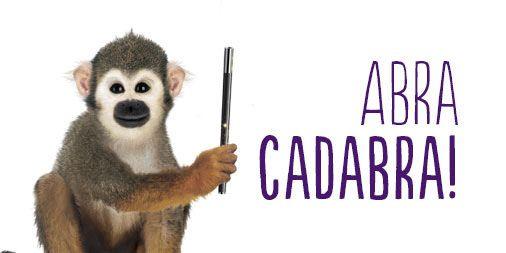 Abracadabra - Monkey.jpg