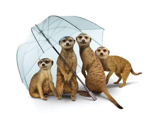 Meerkat Umbrella.jpg