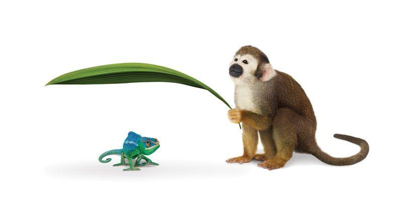 Monkey Leaf.jpg