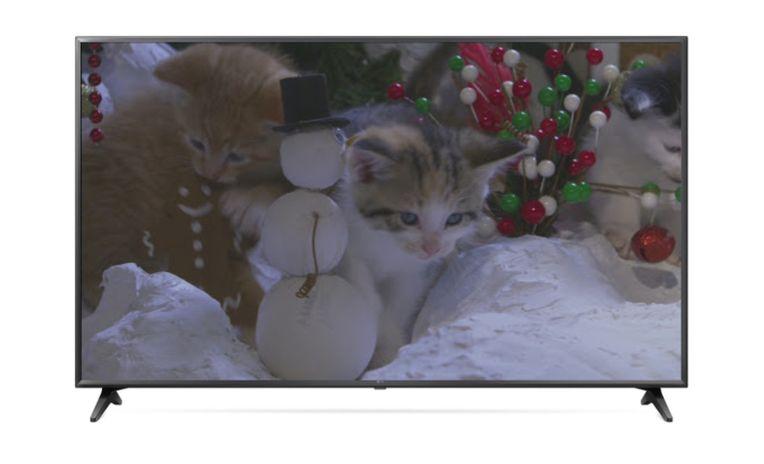 Kitten TV 2.jpg
