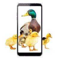 Duck_LG_Vert_Ducklings_Flip_BH_d_LR.jpg