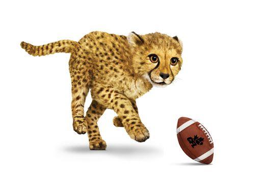 NFL 3.jpg