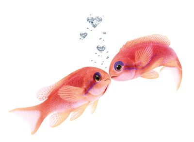 2Anthias_RED_Kiss_HrtBbls_m.eps.jpg