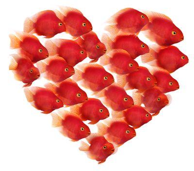Parrotfish_Red_Heart_RightFacing_BH_d_LR.jpg